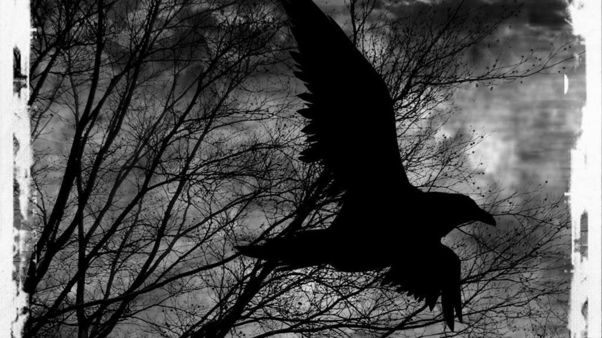 Res: 1920x1080, ... Extraordinary Raven Wallpaper Full size