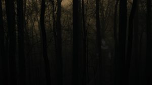 Haunted Forest wallpapers