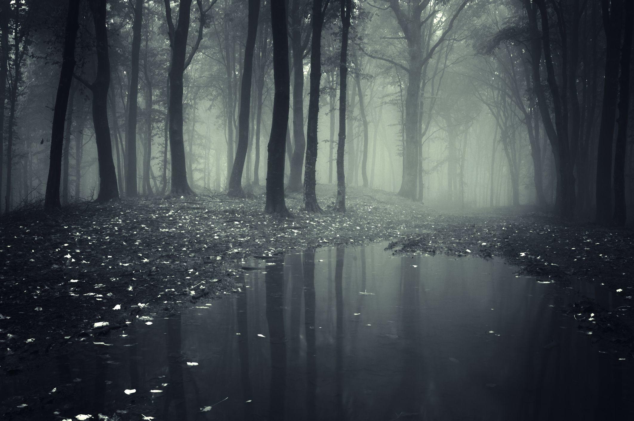 Res: 2124x1412, dark forest