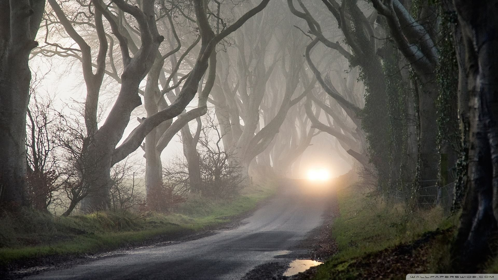 Res: 1920x1080,  Wallpapers Backgrounds - Road Through Haunted Forest wallpaper