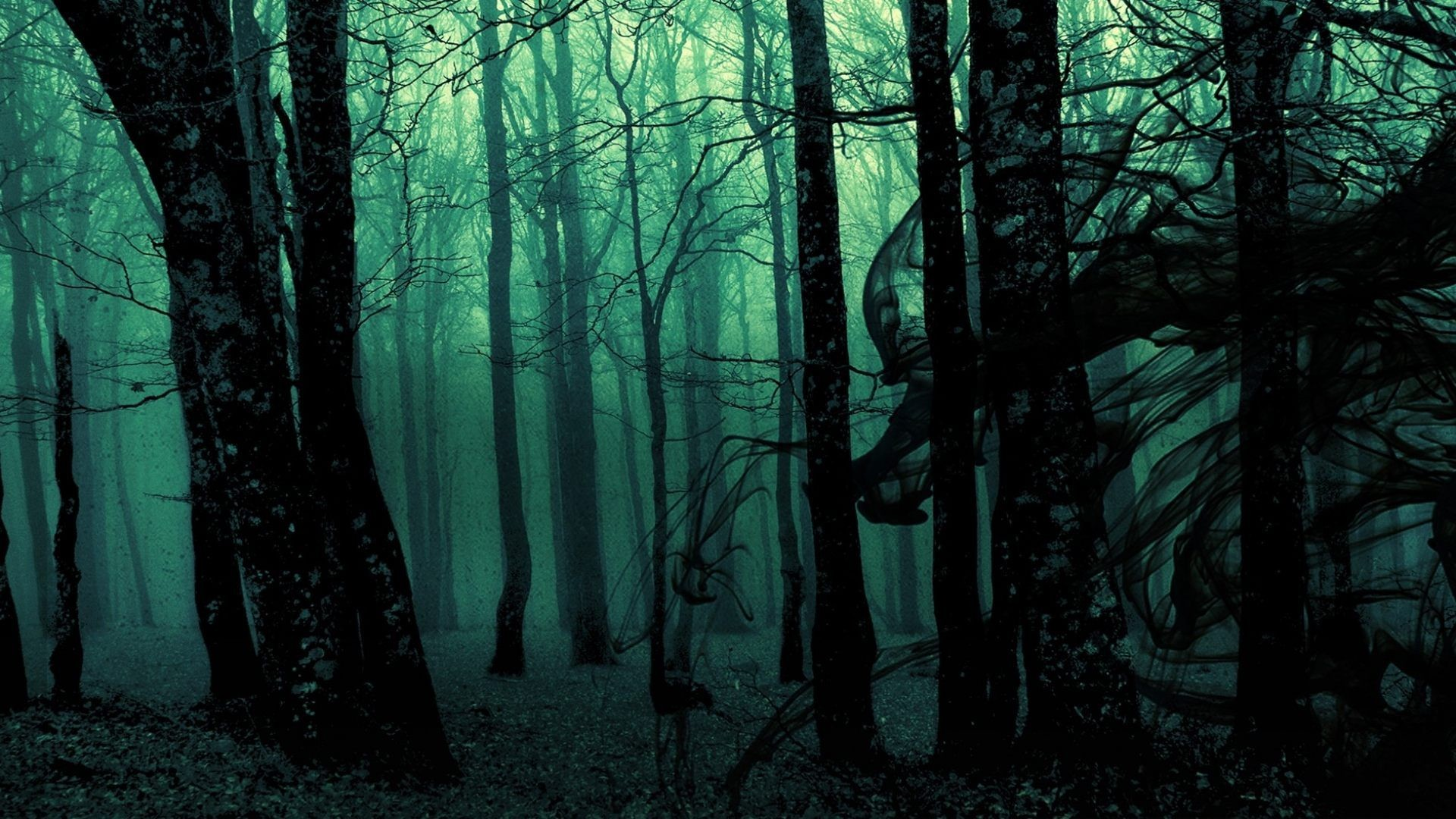 Res: 1920x1080, Explore Forest Wallpaper, Hd Wallpaper, and more!