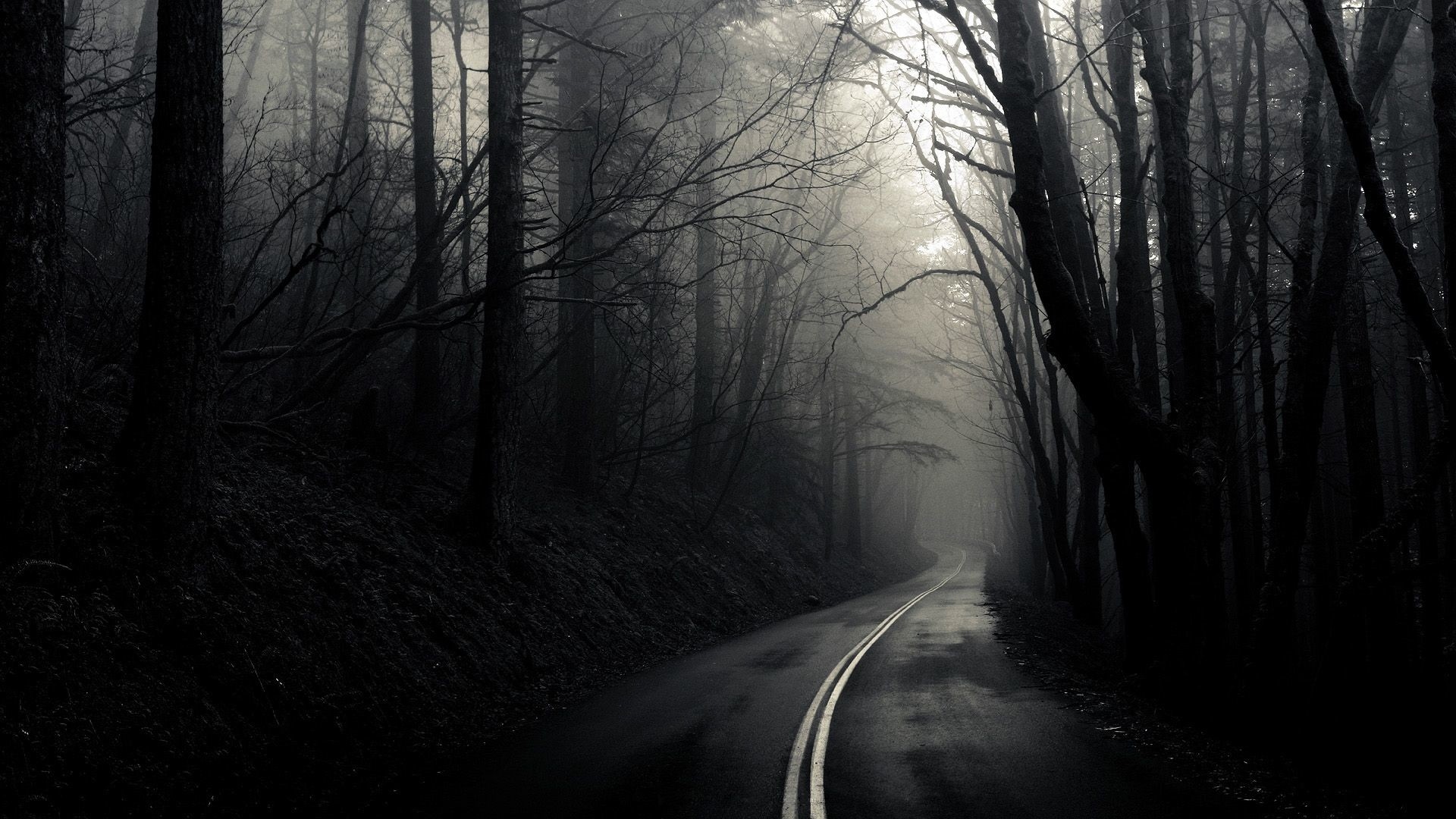 Res: 1920x1080, Drive if you dare road through trees · Haunted ForestTumbler BackgroundsCool  ...