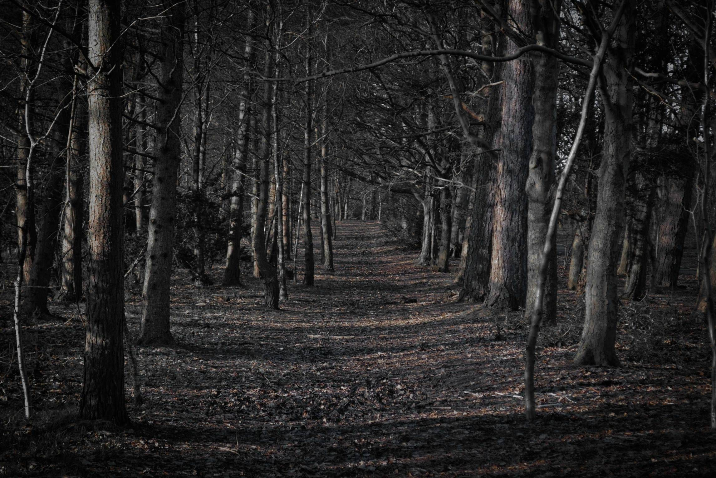Res: 2294x1530, Creepy Forest Wallpaper HSE Nature Desktop Backgrounds 1920×1080 Creepy Forest  Backgrounds (35 Wallpapers) | Adorable Wallpapers
