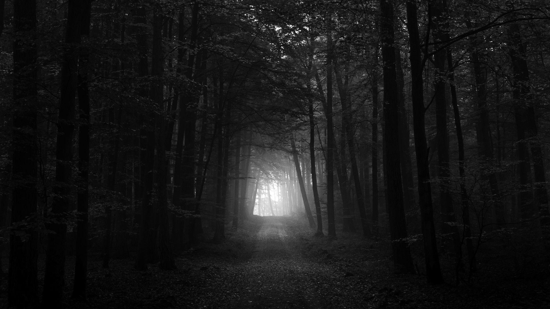 Res: 1920x1080,  1920x1200 Haunted Forest wallpaper - 719409 · Download · Gothic  ...