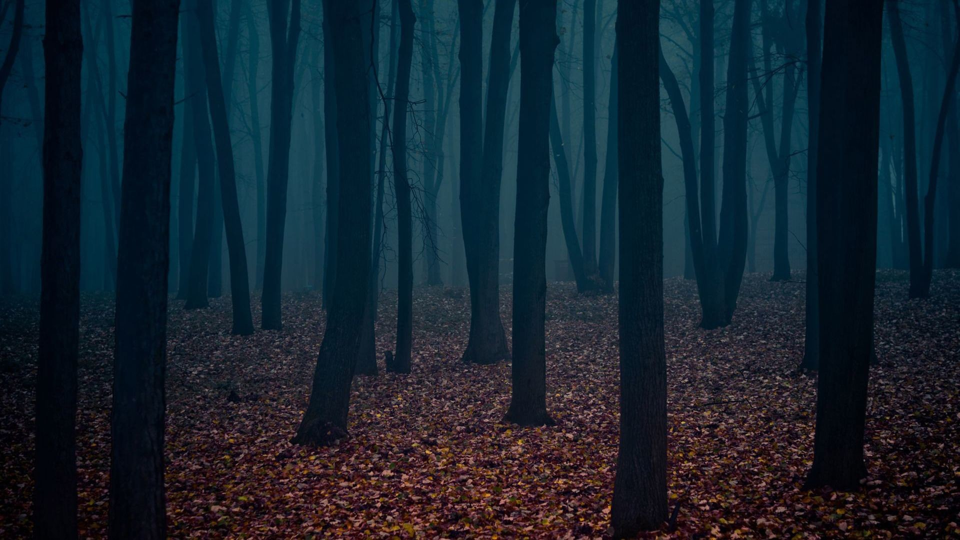 Res: 1920x1080, Dark Forest Wallpaper For Iphone #AEQ
