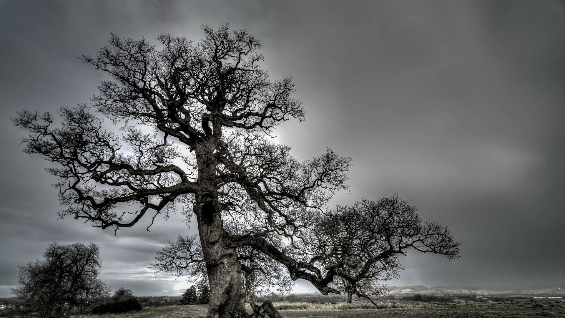 Res: 1920x1080, Grey Sky Gnarled Tree Fields Spectacular Forest Wallpaper Mobile
