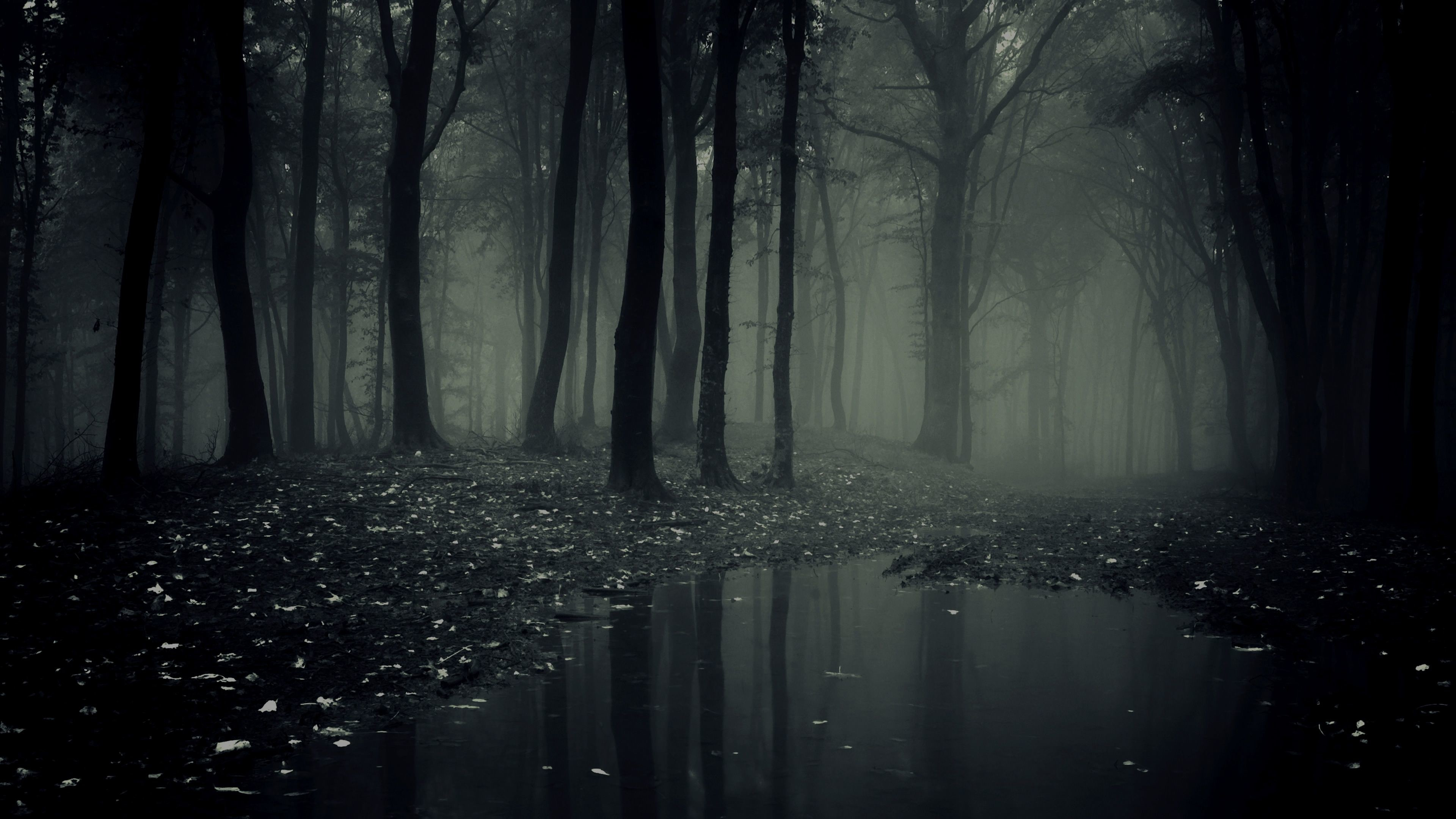 Res: 3840x2160, Dark Forest Wallpaper For Mac #pnu