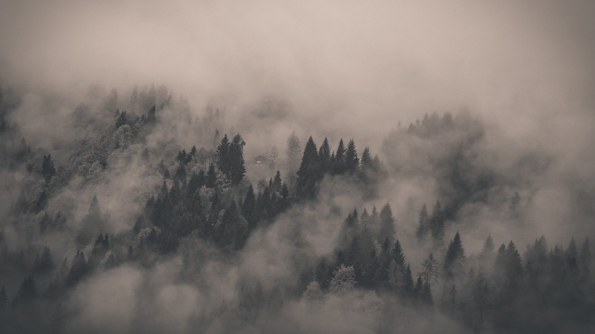 Res: 1920x1080,  Foggy Forest Wallpaper 13858