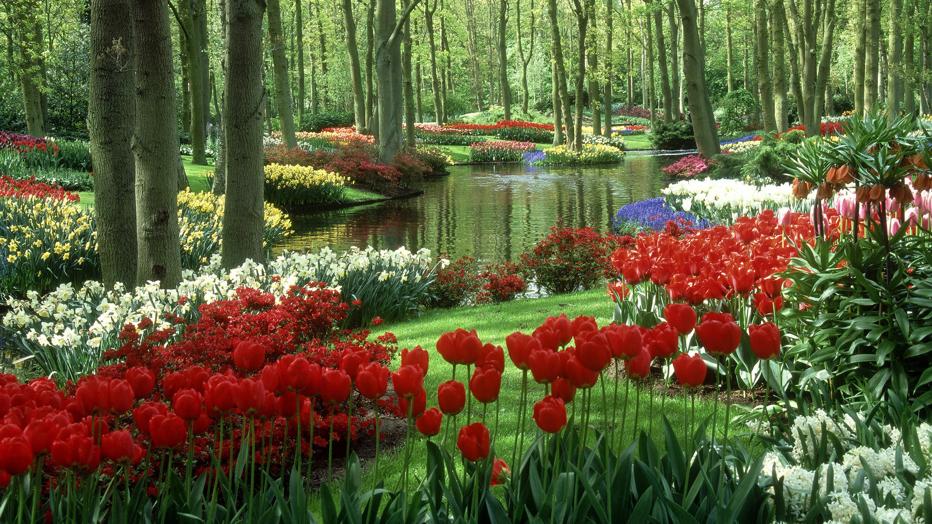 Res: 1920x1080, nature flower beauty pictures wallpapers