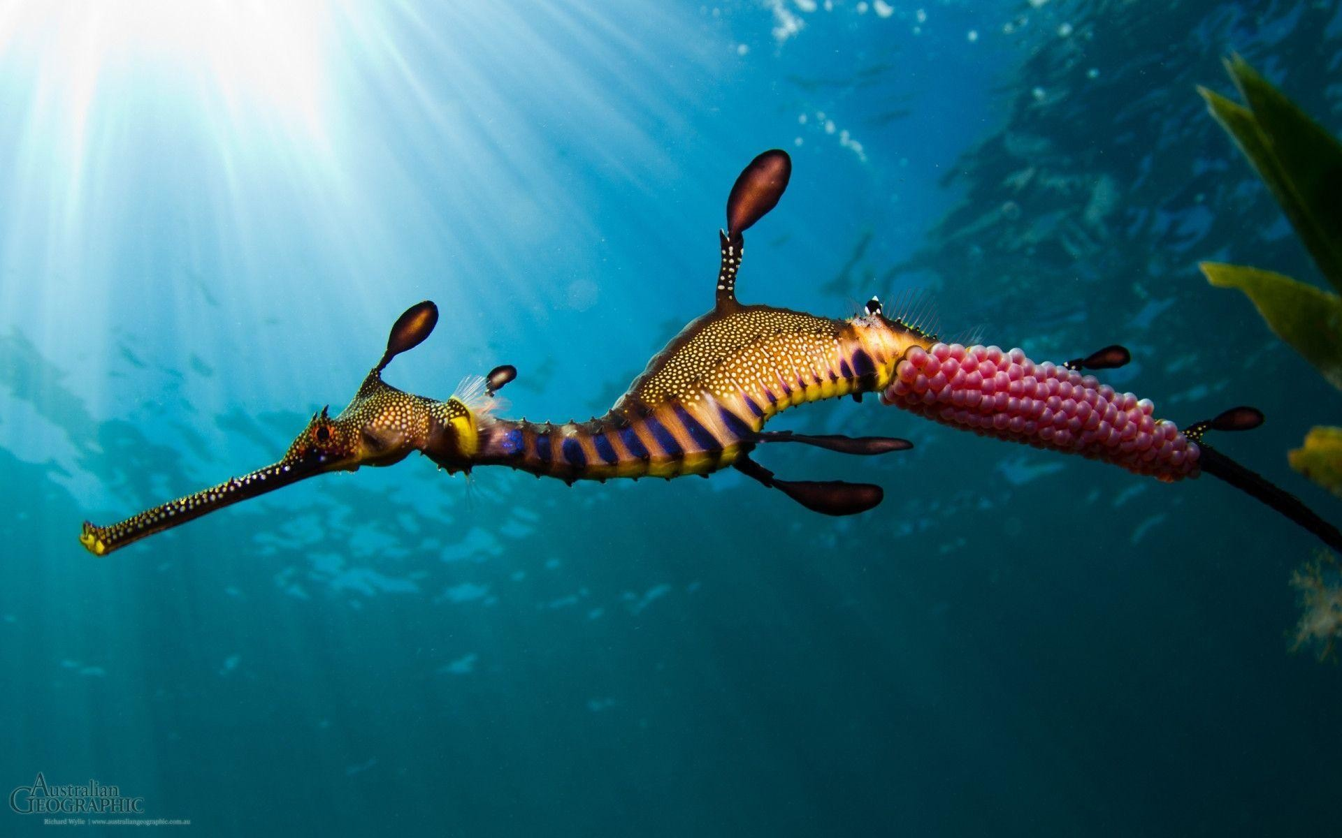Res: 1920x1200, 17 Seahorse Wallpapers | Seahorse Backgrounds