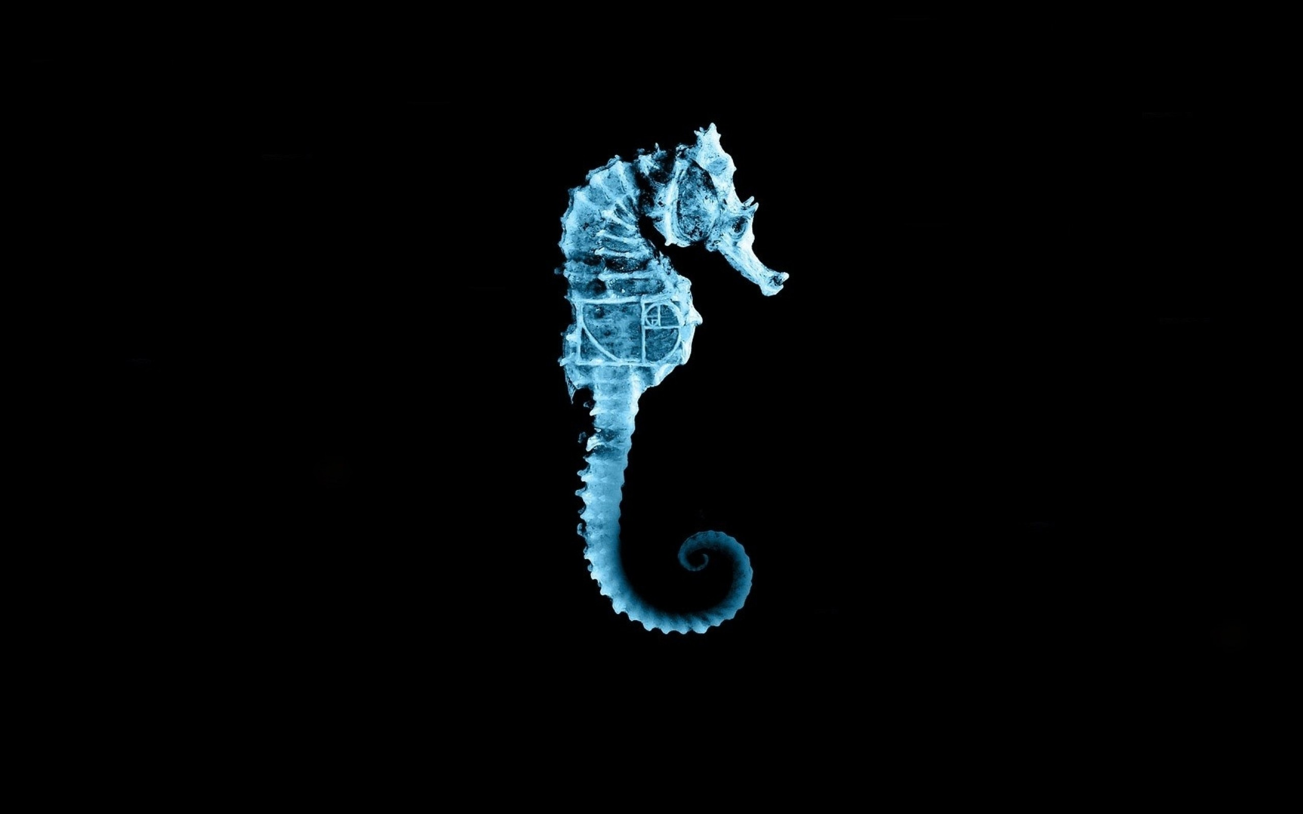 Res: 2560x1600, Fringe Seahorse Wallpaper
