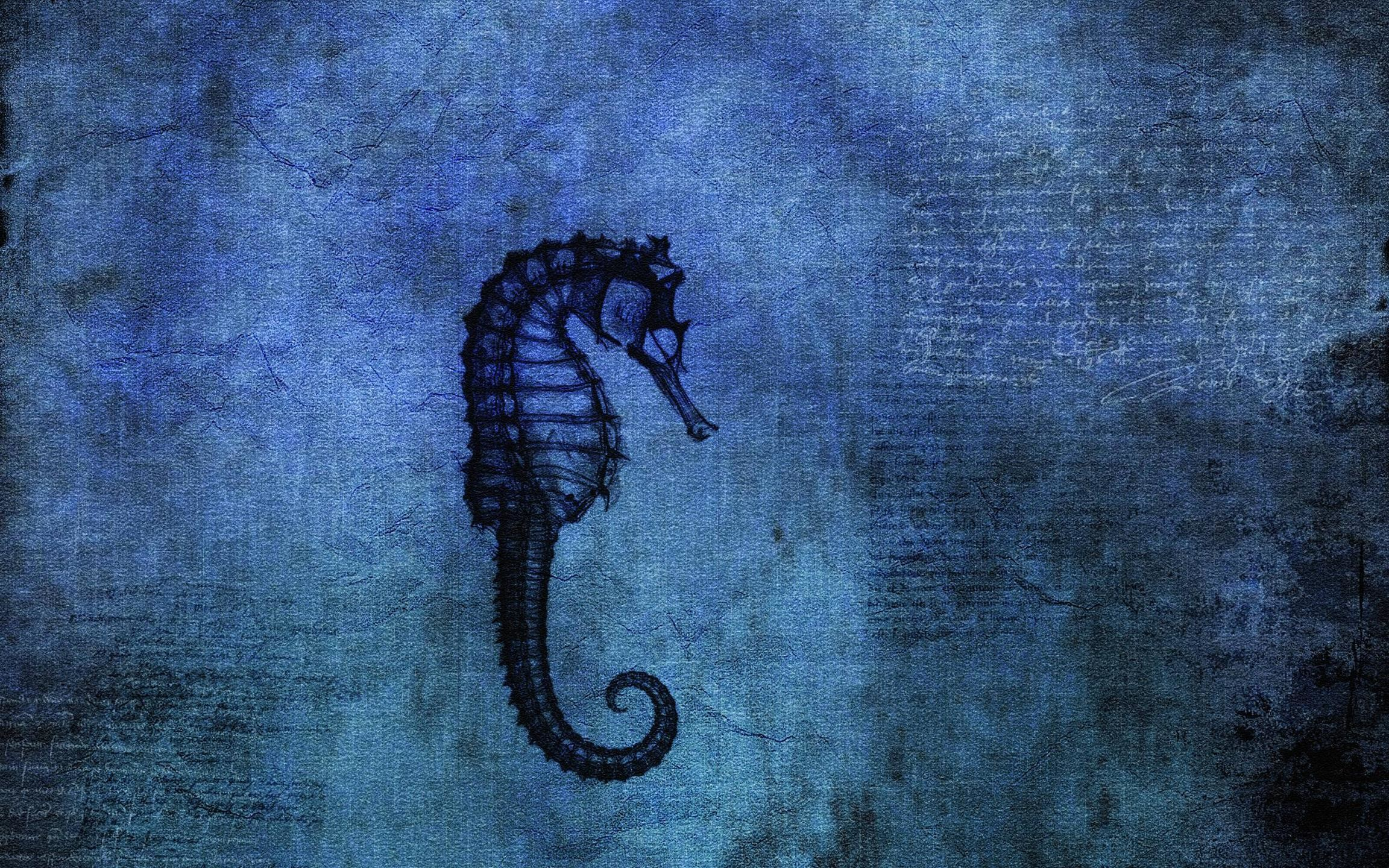 Res: 2304x1440, 17 Seahorse Wallpapers | Seahorse Backgrounds