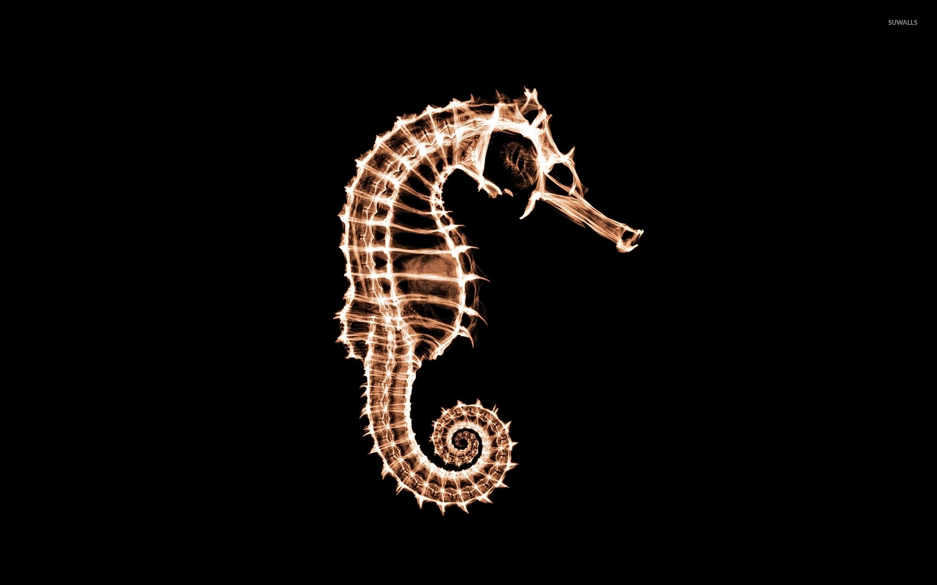 Res: 1920x1200, X-ray of a seahorse wallpaper