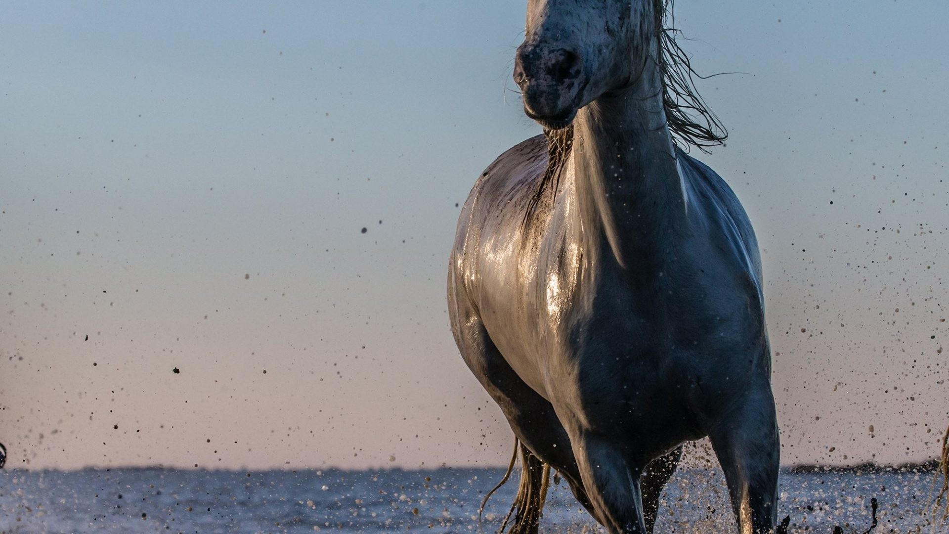 Res: 1920x1080, Spray Lake Drops Water Sea Ocean Horse Animal Wallpapers Picture
