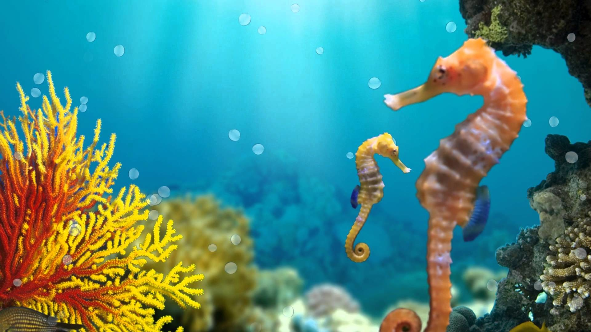Res: 1920x1080, Seahorses - animated