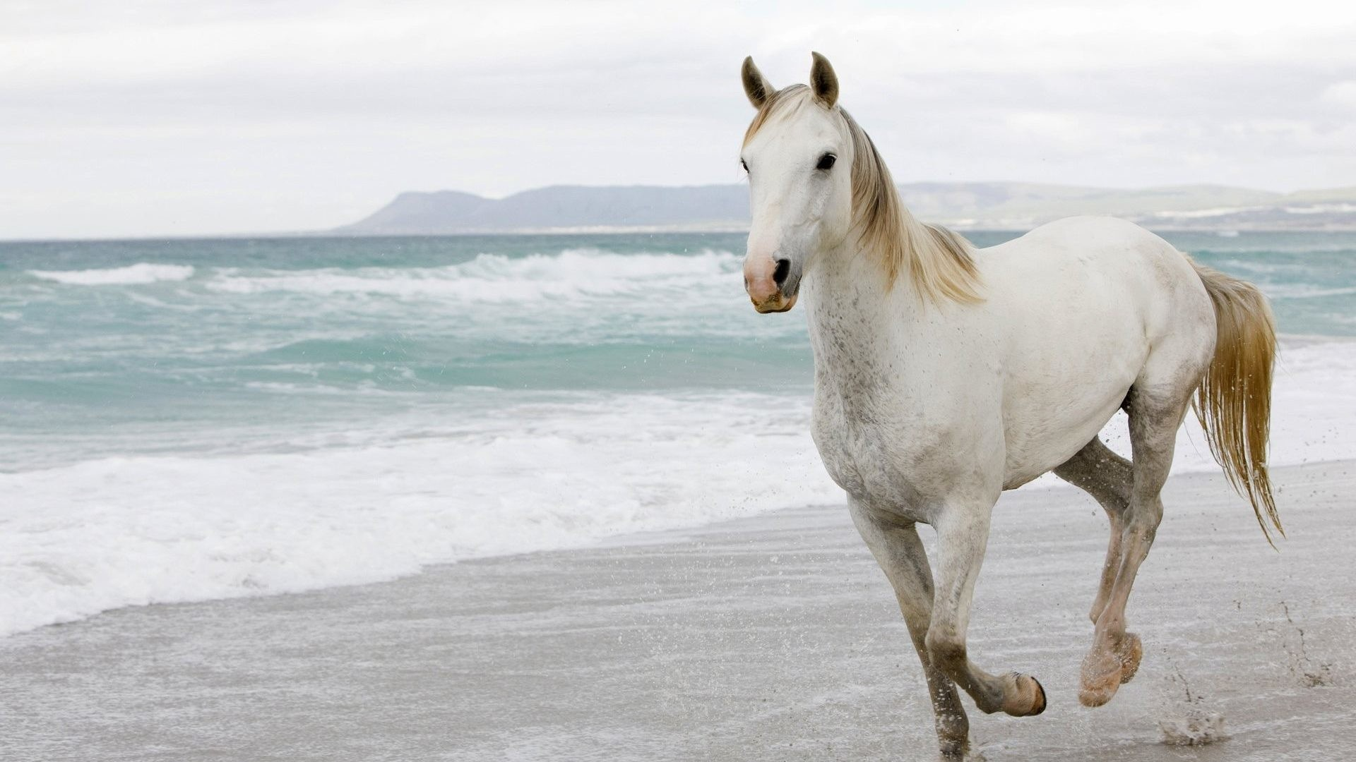 Res: 1920x1080, Waves Tag - Waves Canter Cloudy Gallop Horse Surf Beach Sea Funny Photos By  Animals for