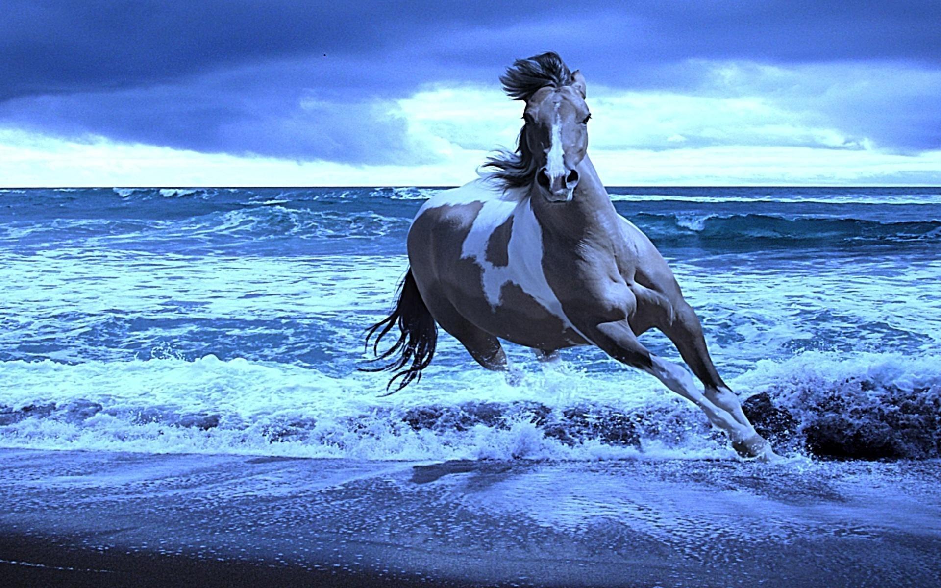 Res: 1920x1200, <b>Water Horse Wallpaper</b> 43756 | RIMEDIA