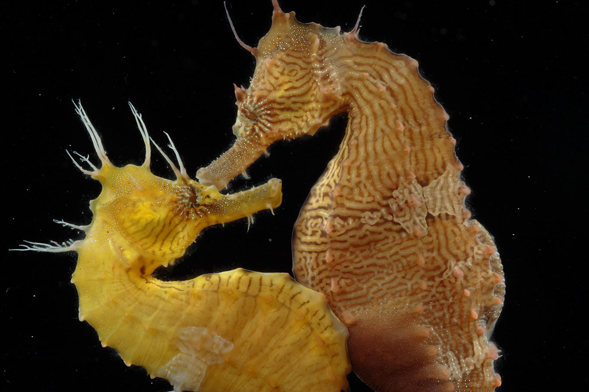 Res: 2048x1365, Seahorse Pics, Animal Collection