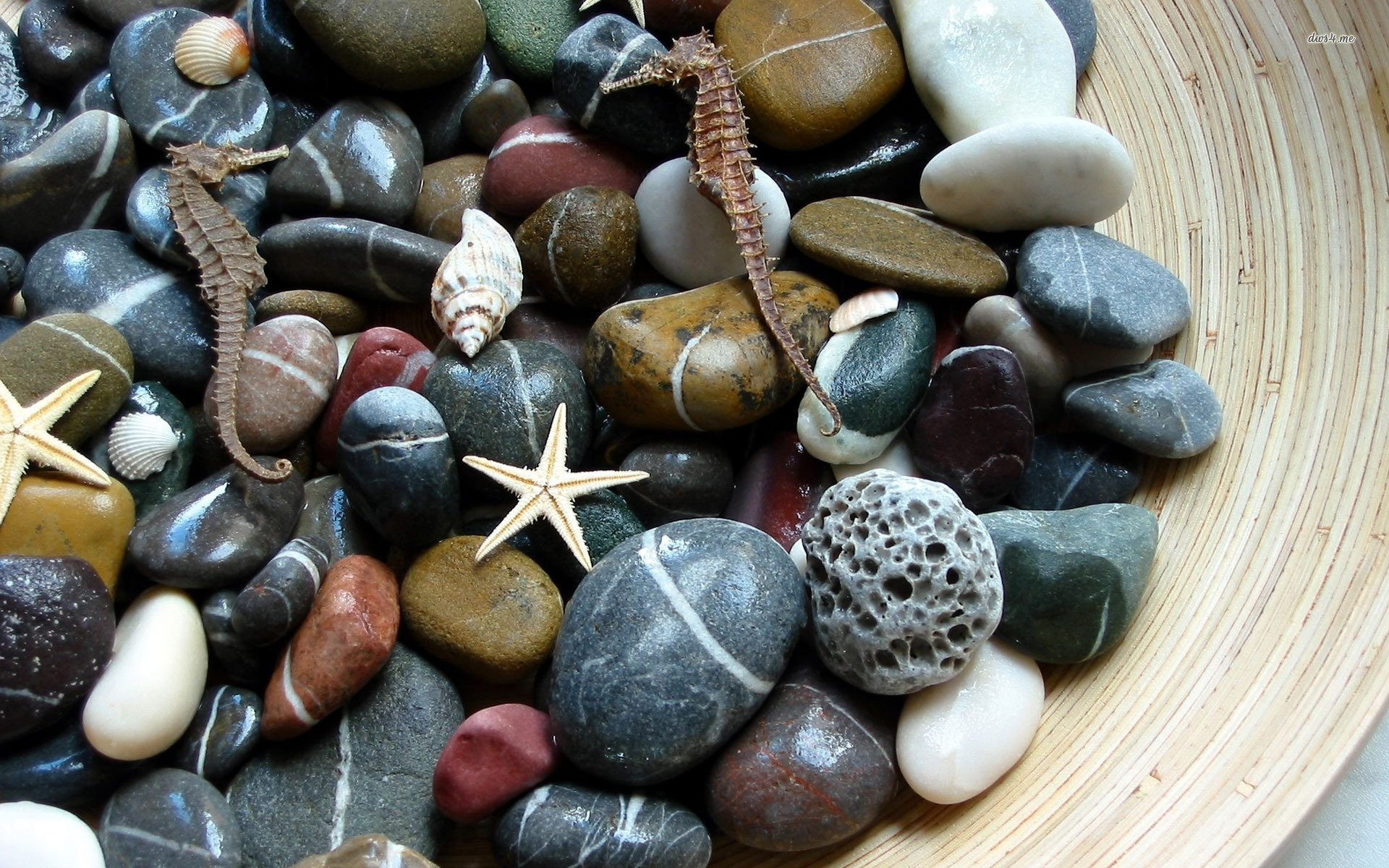 Res: 1920x1200, pebbles and sea creatures 333660