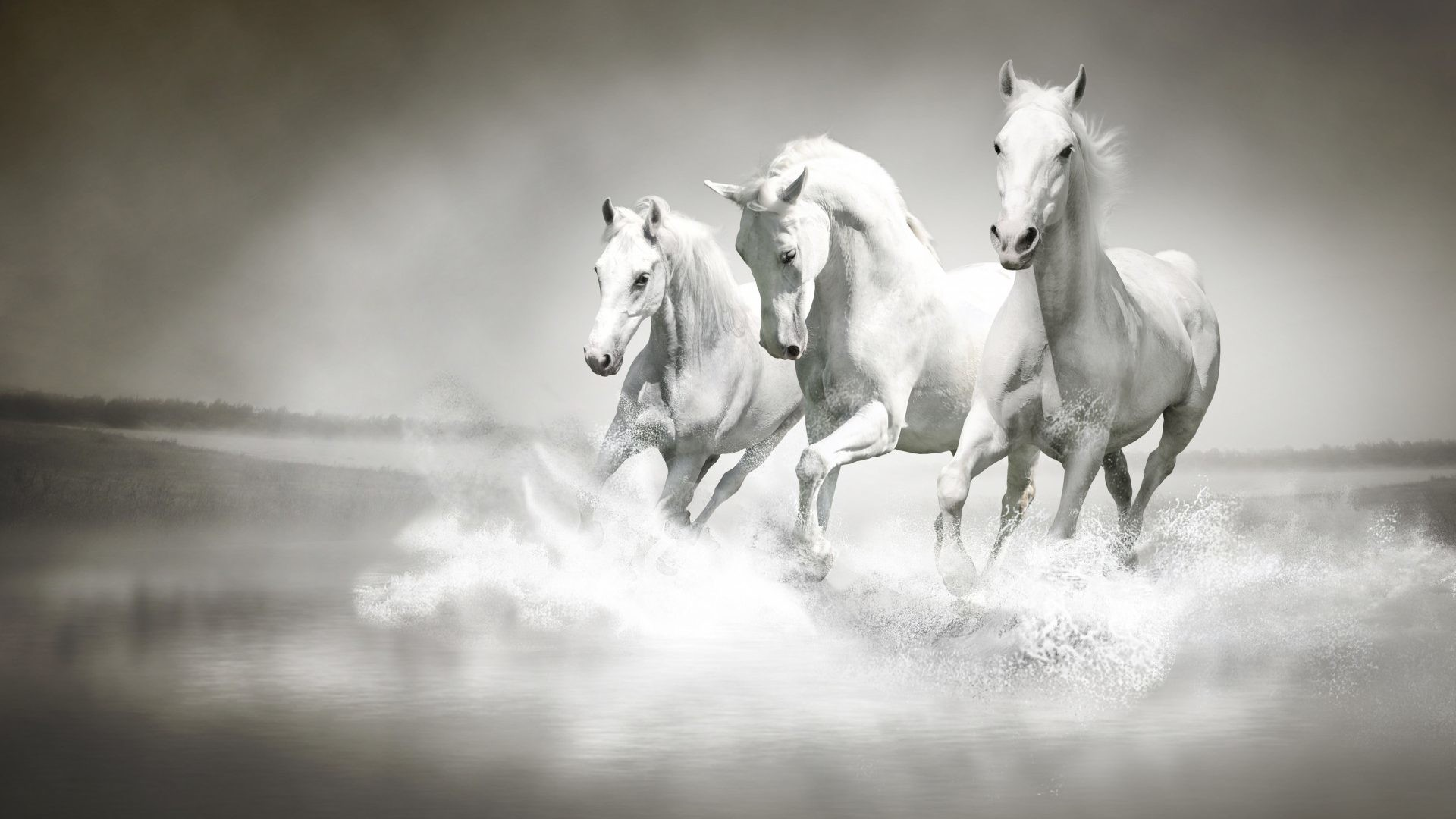 Res: 1920x1080, Waves Tag - Manipulation Ocean Sea Digital Art Waves Horses Beaches Animal  Love Wallpapers for HD