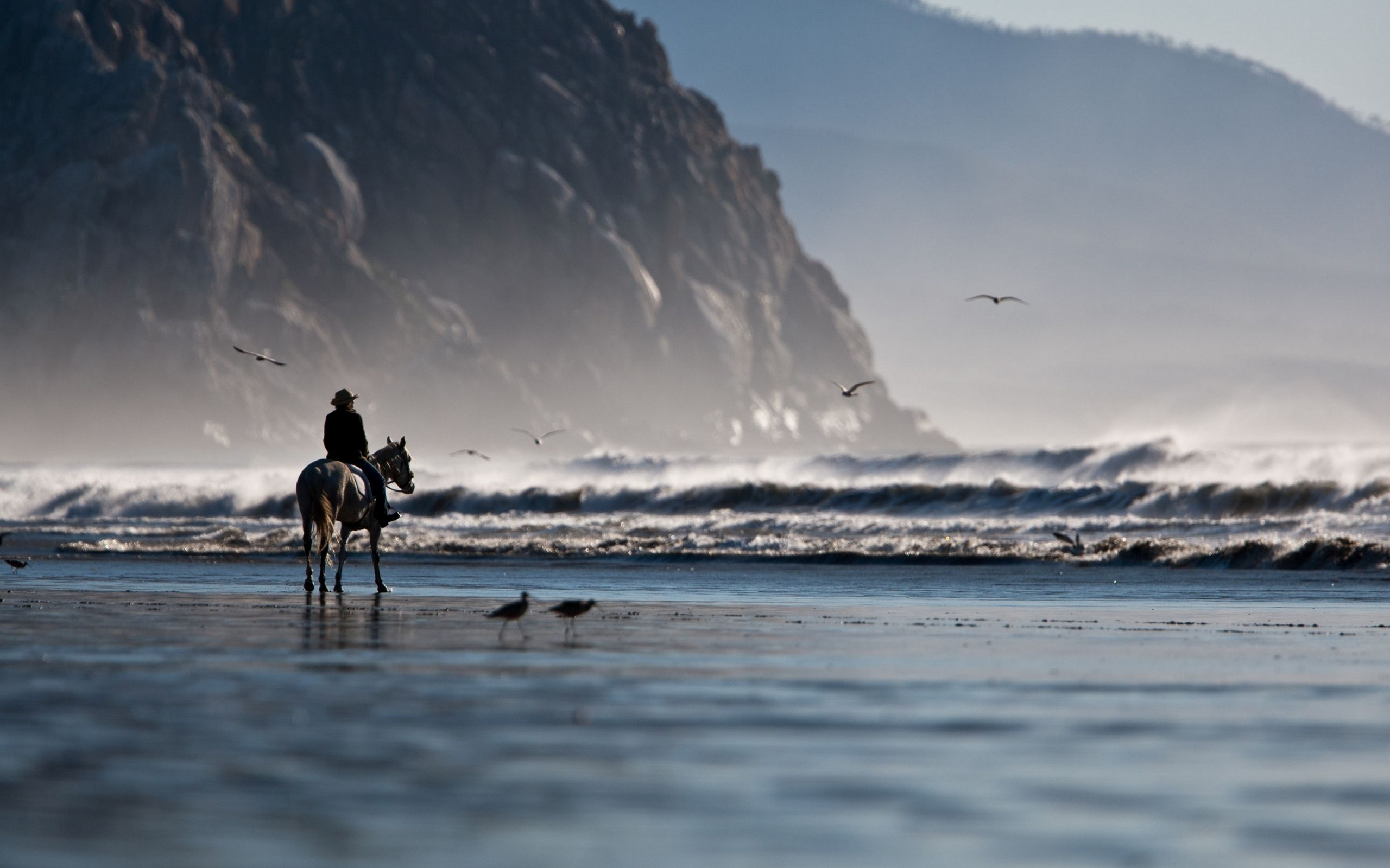 Res: 2560x1600, Horse To The Sea Wallpaper