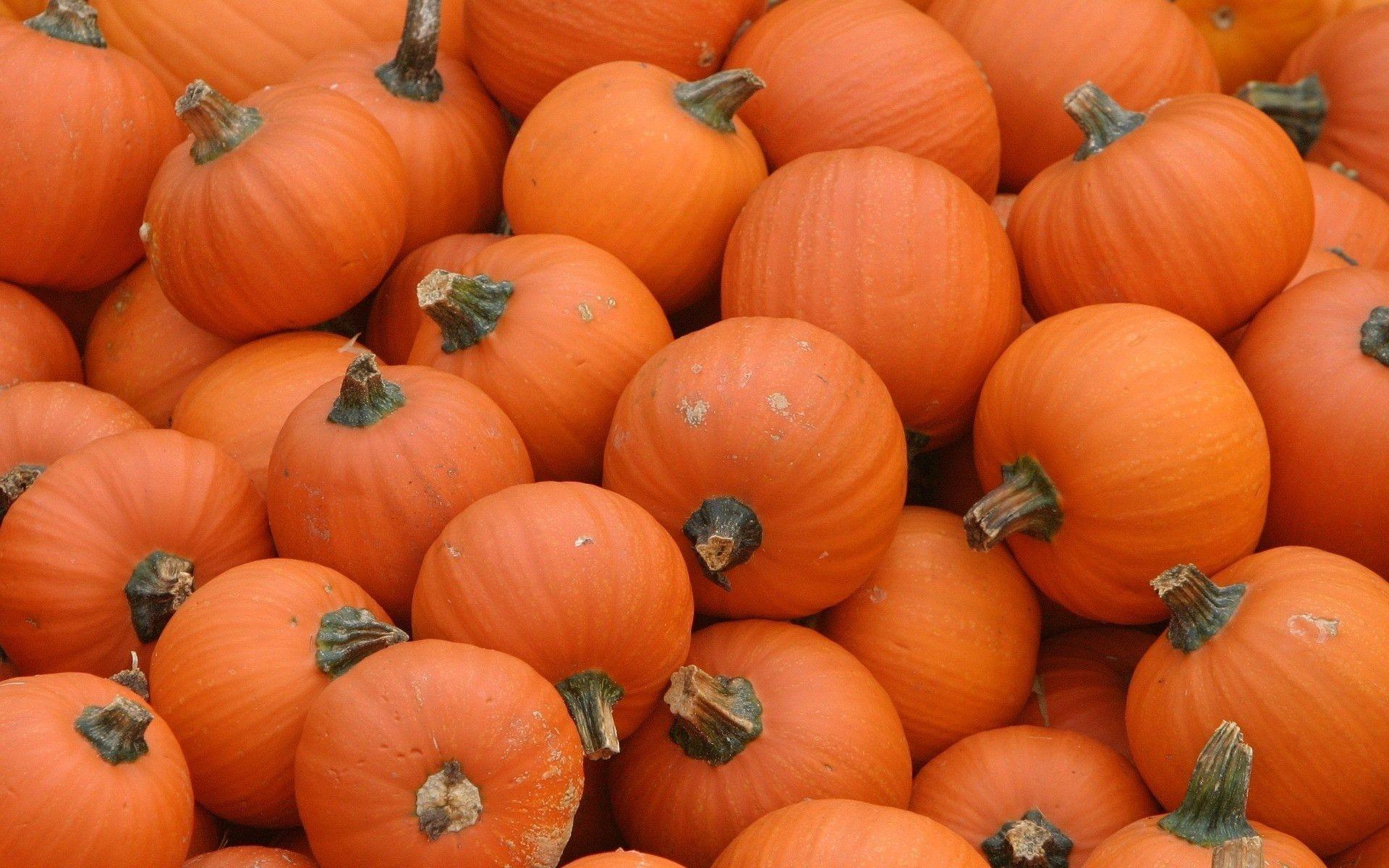 Res: 1920x1200, Free Desktop Pumpkin Wallpapers.