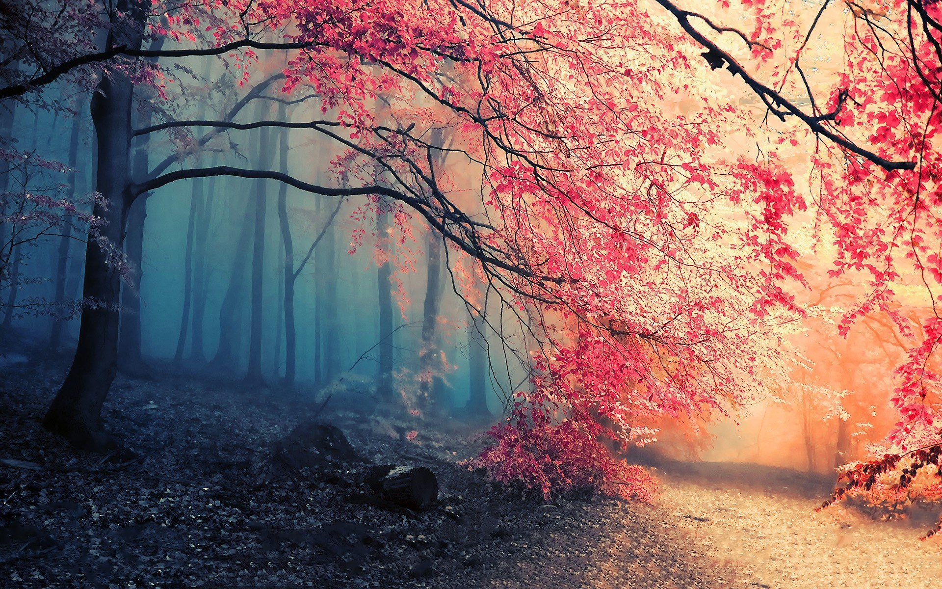 Res: 1920x1200, HD Wallpaper | Background Image ID:411820