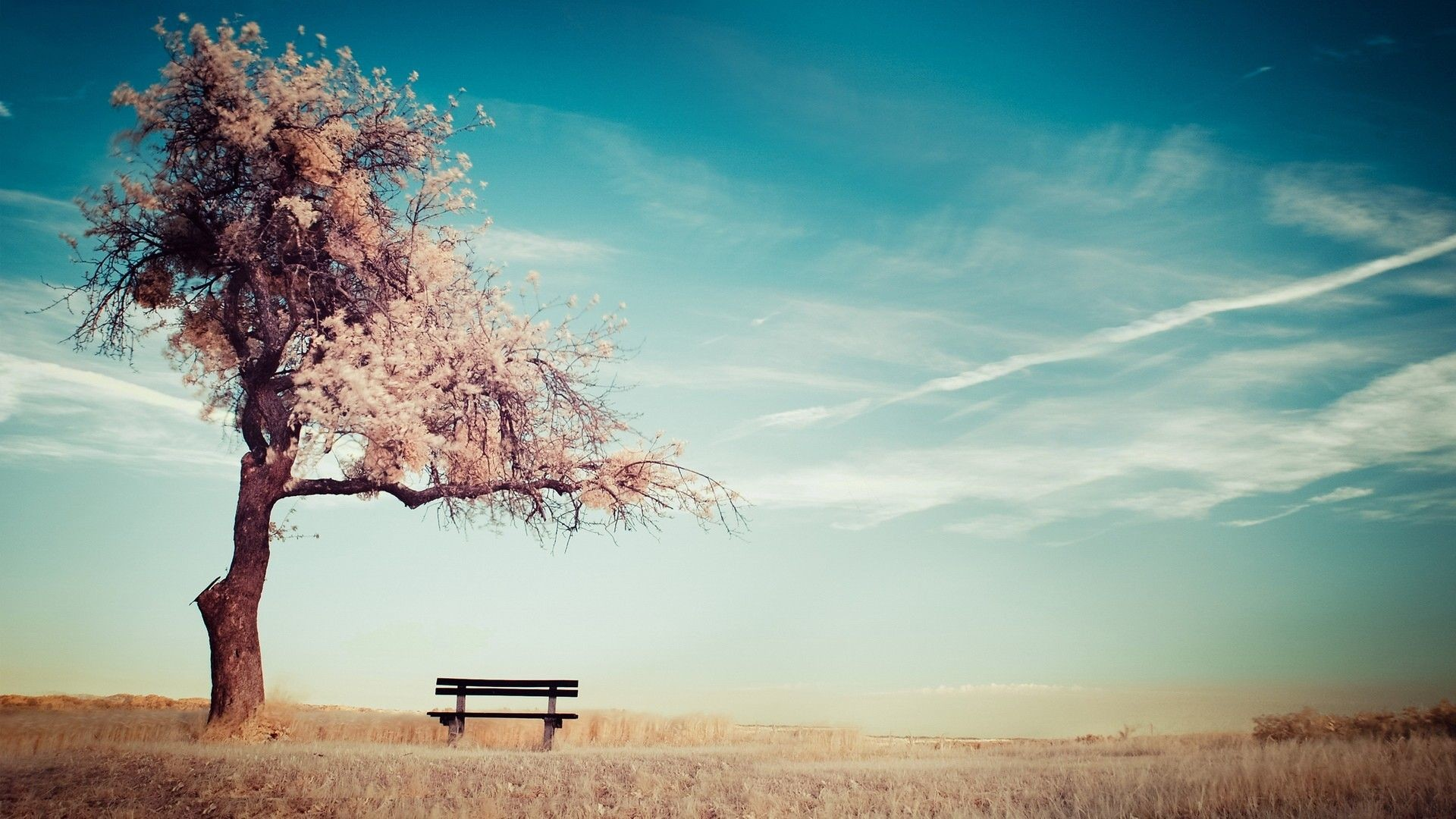 Res: 1920x1080, Cherry Blossoms by the Bench HD Wallpaper. « »