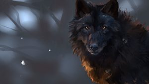 Dark Wolf wallpapers