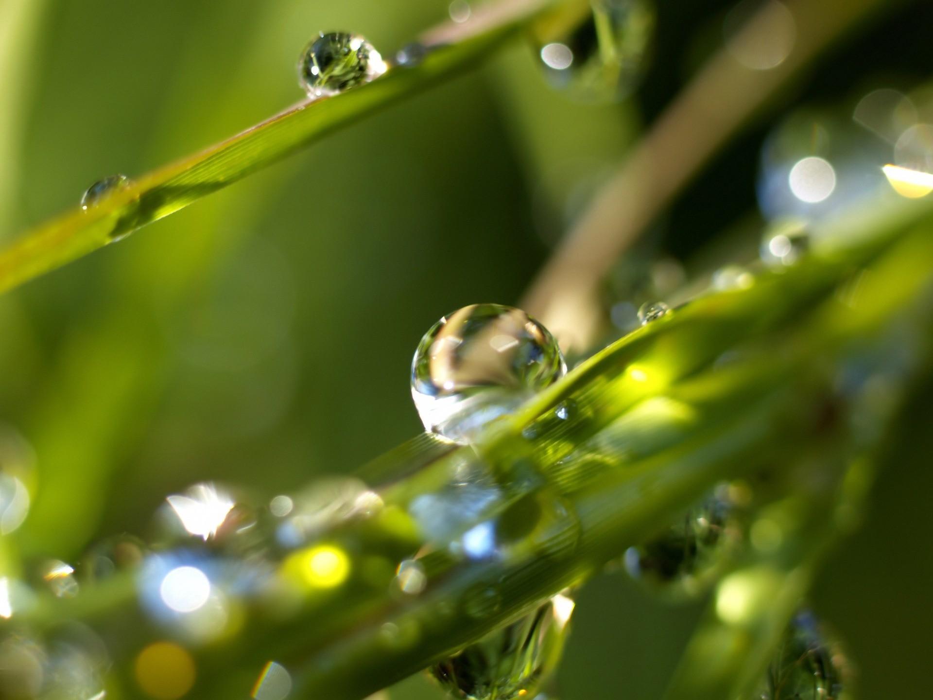 Res: 1920x1440, Rain drops Wallpaper Plants Nature Wallpapers