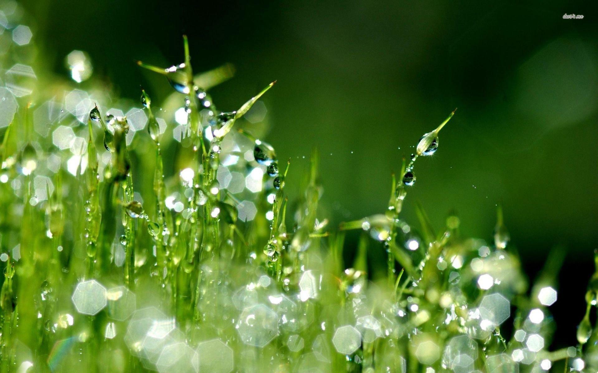 Res: 1920x1200, Raindrops on grass wallpaper