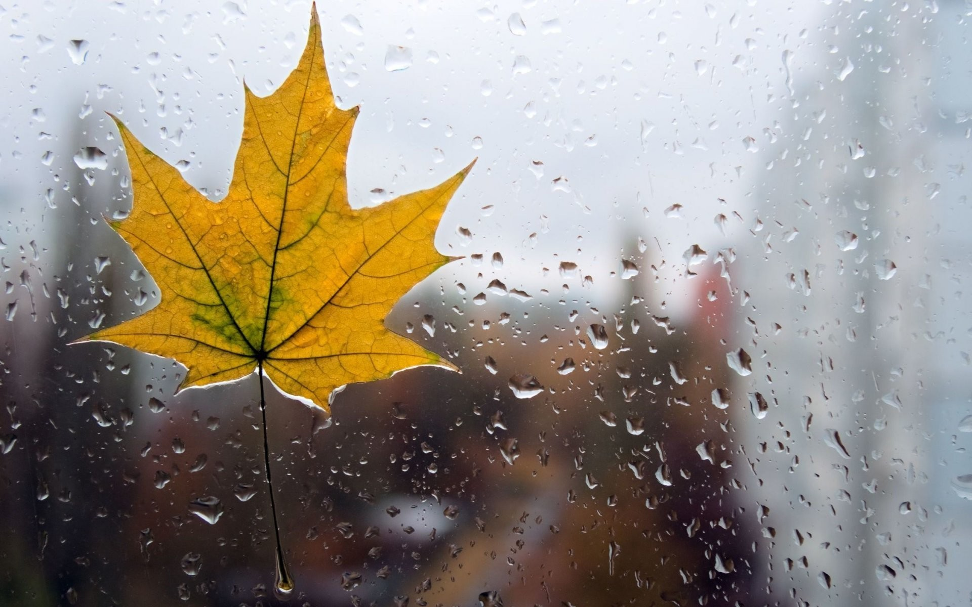Res: 1920x1200, close up leaf form yellow rain drops water glass macro leaves background  wallpaper widescreen full screen