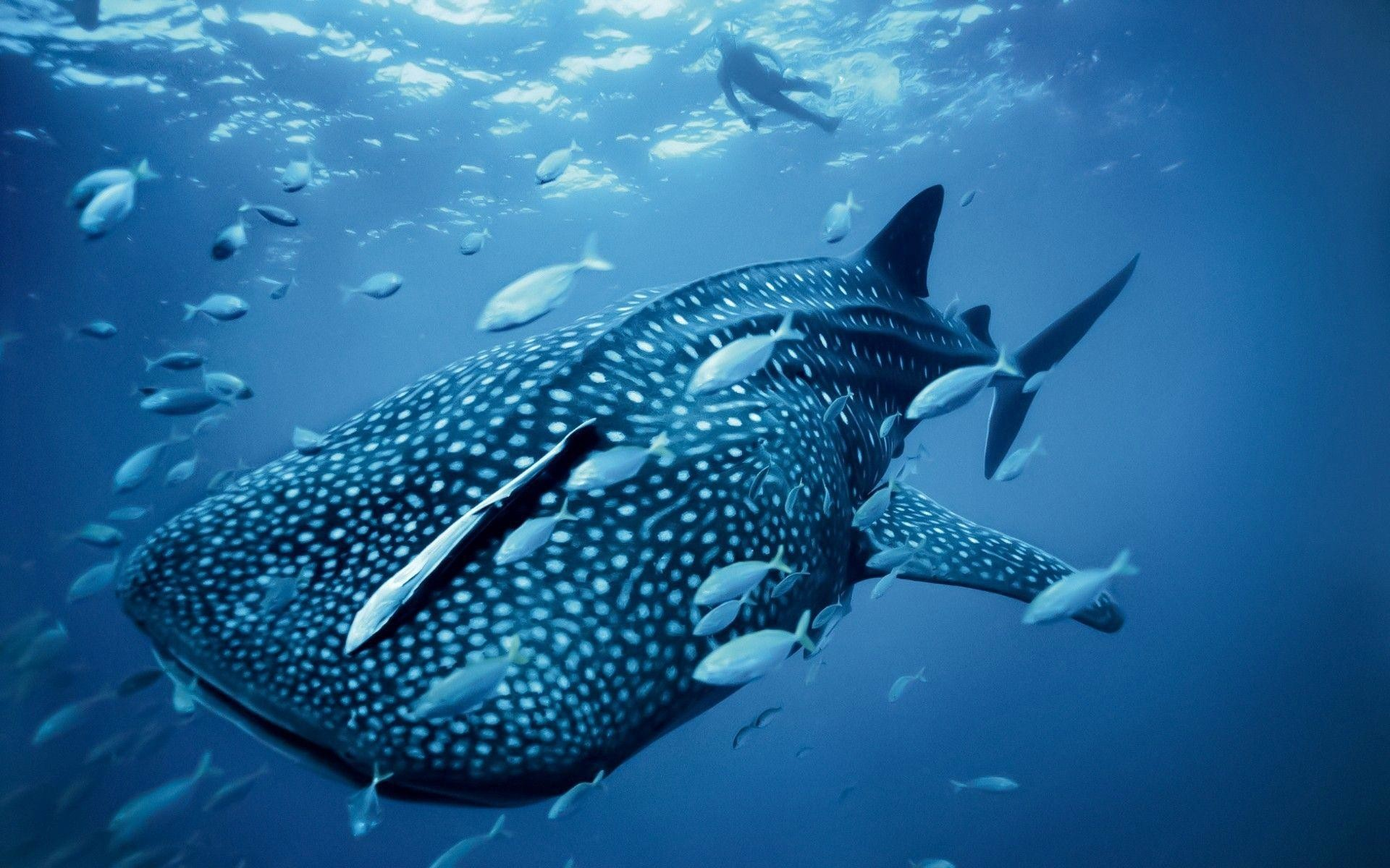 Res: 1920x1200, Sea Creature Wallpapers | Free Download HD Latest Ocean Fish Images