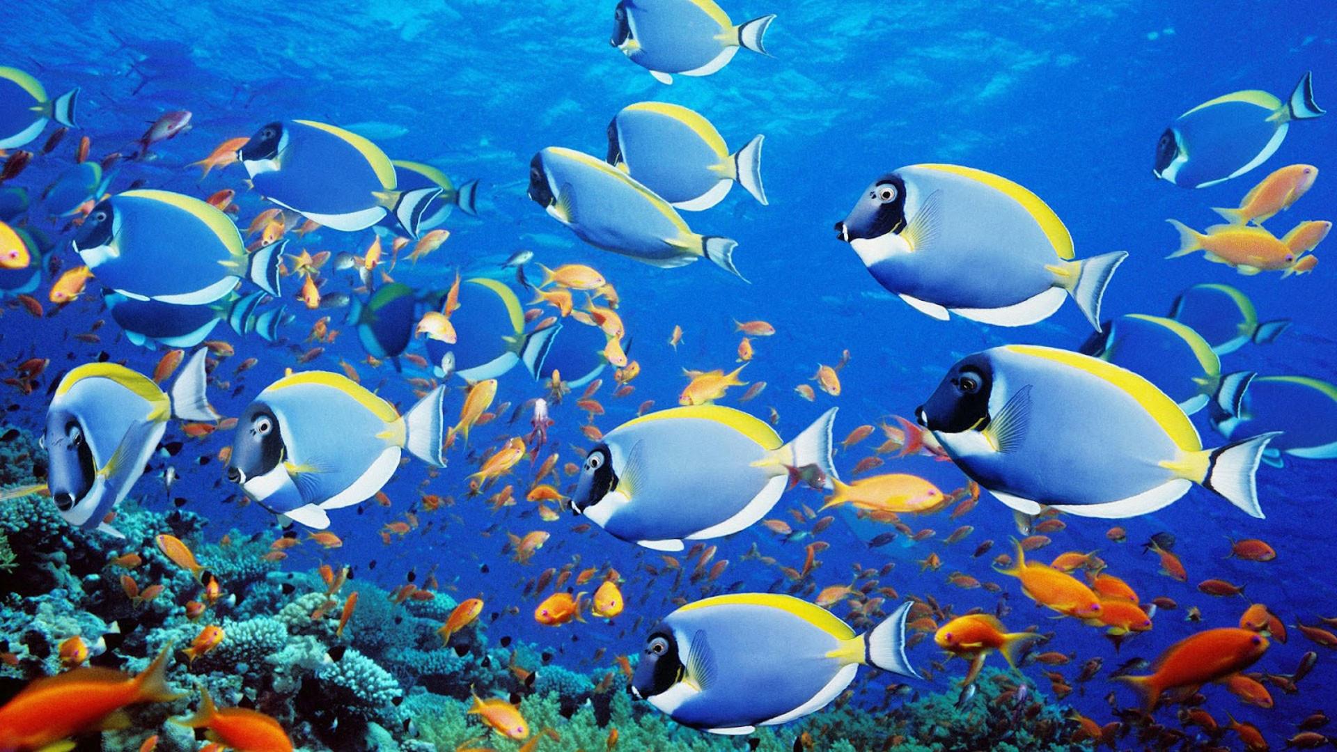 Res: 1920x1080, Ocean Fish Desktop Wallpapers