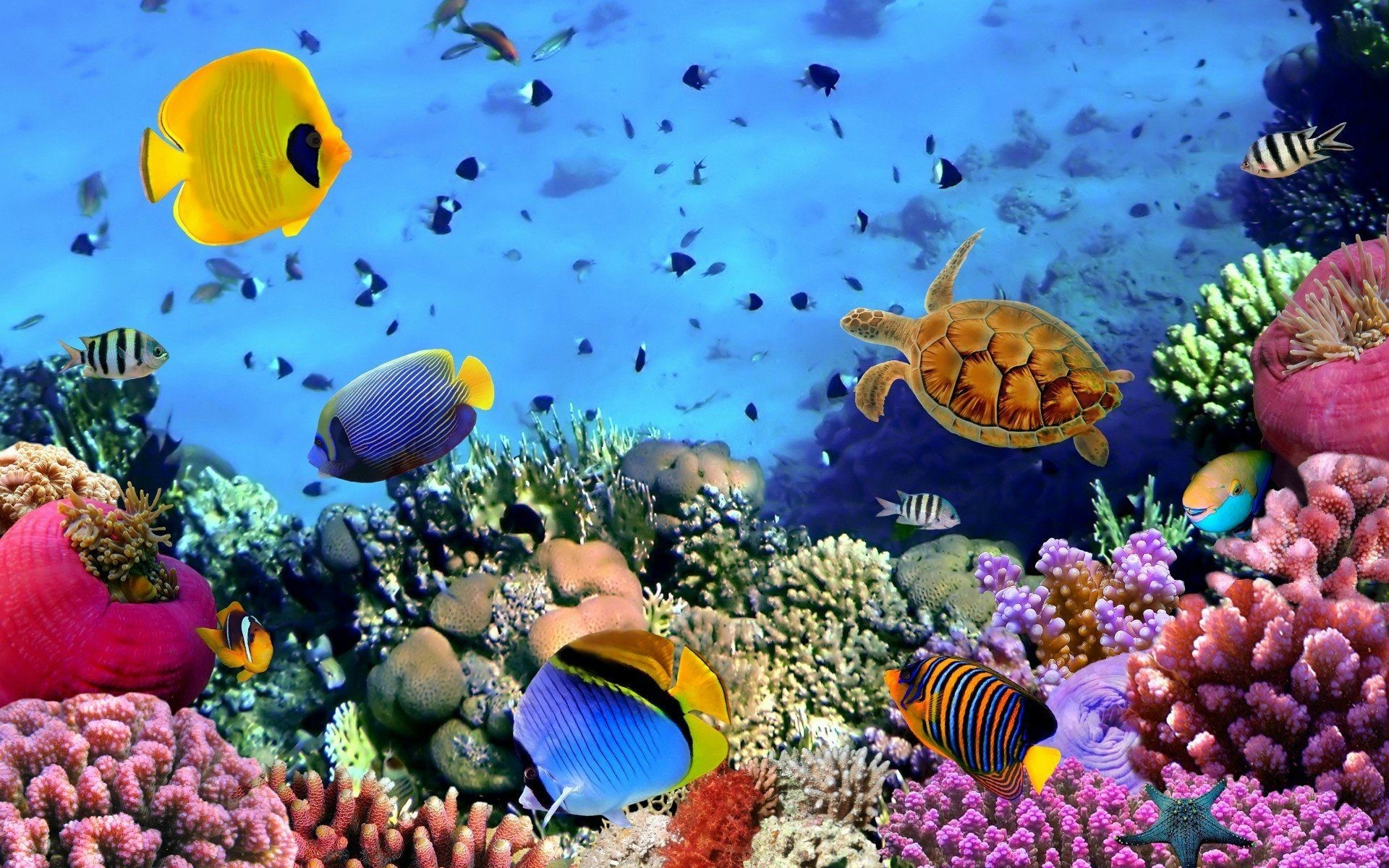 Res: 1920x1200, Animals Image 4k Background HD Picture ocean fish wallpaper