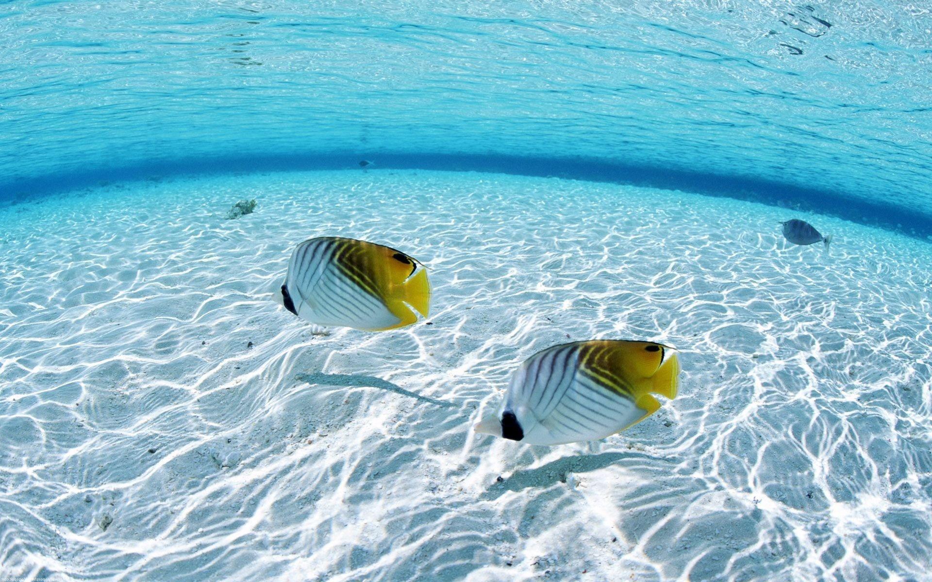 Res: 1920x1200, Ocean fish seascapes wallpaper