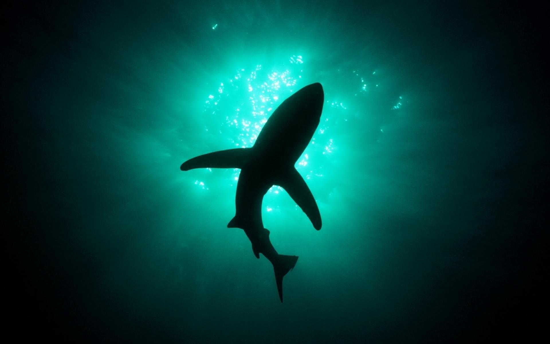 Res: 1920x1200, water ocean animals fish sharks underwater sea underwater world   wallpaper Art HD Wallpaper