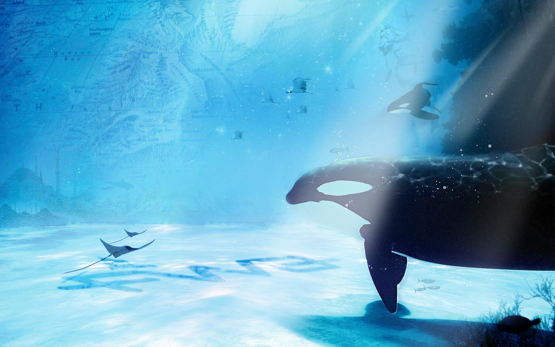 Res: 1920x1200, animals, wallpapers, sea, freeandroid, sealife, ocean, display, art,  whales, ray, free, manta, sunlight, underwater, cg, life, sting,  digital,_ ...