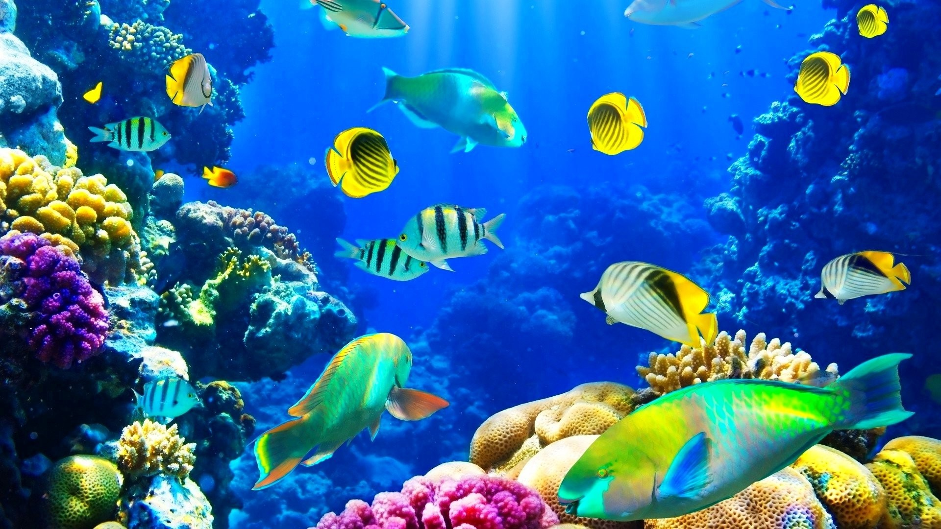 Res: 1920x1080, Sea Life Wallpapers 18 - 1920 X 1080