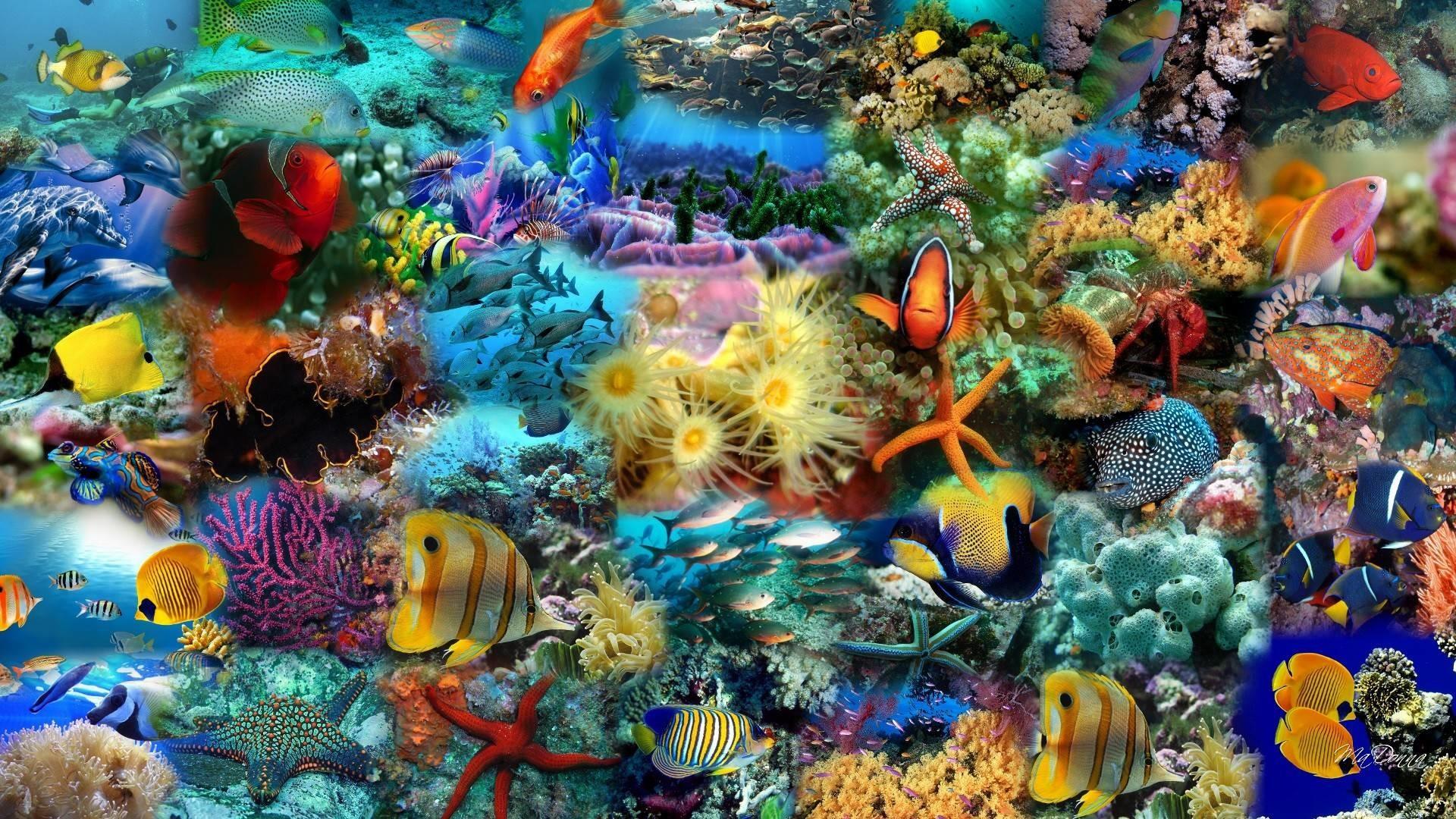 Res: 1920x1080, Ocean Fish New Pics