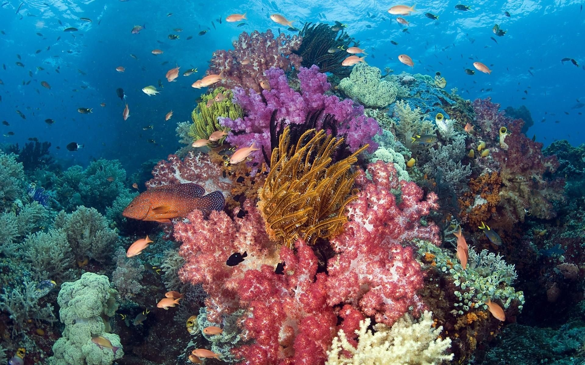Res: 1920x1200, Tropical Ocean Animals And Plants Nature animals fishes tropical