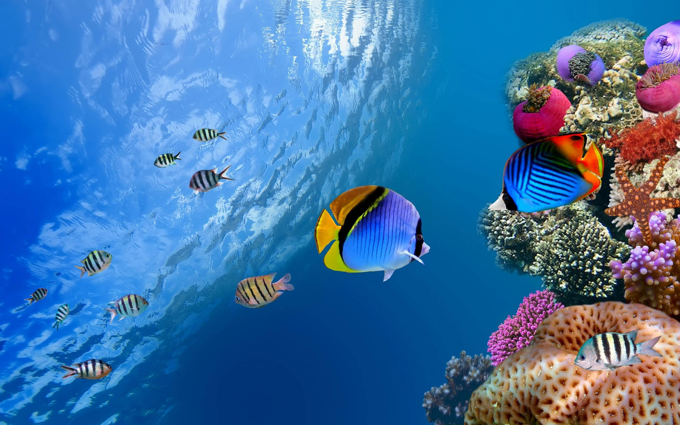 Res: 2880x1800, Underwater Wallpapers - Full HD wallpaper search