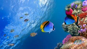Underwater Desktop wallpapers