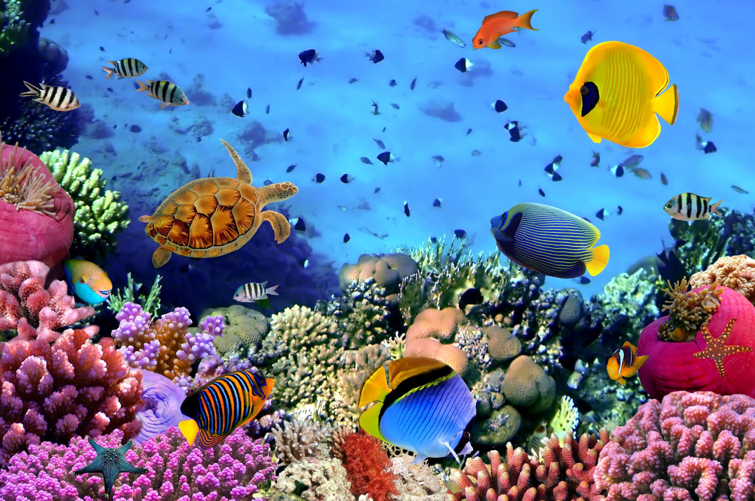 Res: 2500x1660, Photo: 100% Quality HD Underwater Backgrounds, by Reed Brawn – download for  free