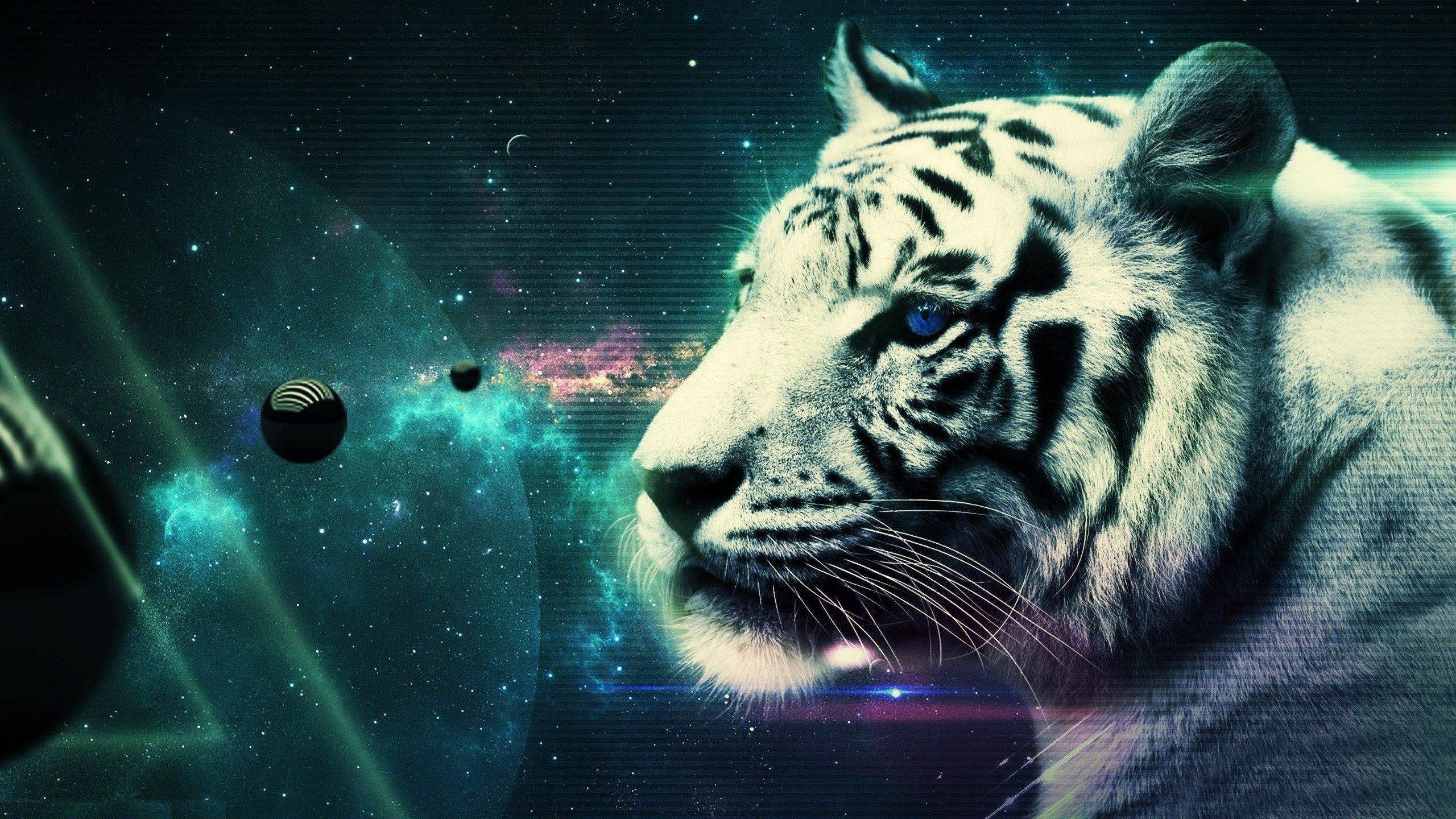 Res: 2560x1440, Cool White Tiger Wallpaper 25689  px ~ HDWallSource.
