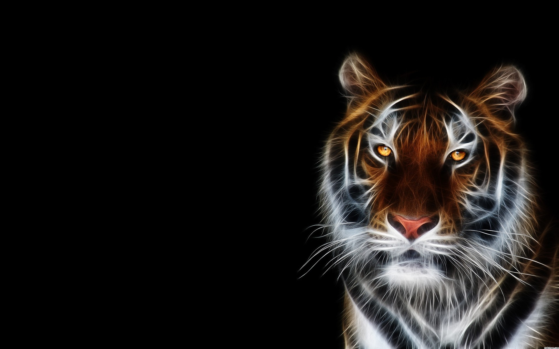Res: 1920x1200, beautiful tiger wallpaper
