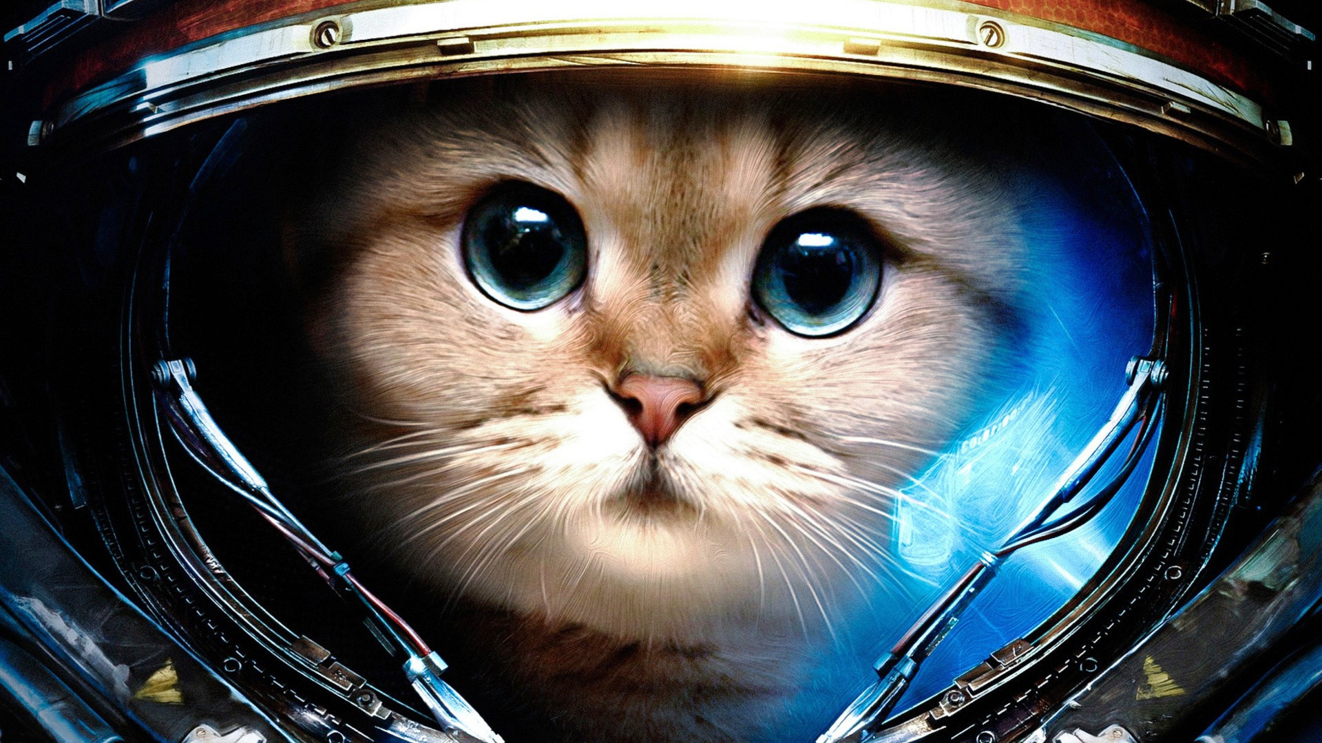 Res: 1920x1080, Space-cat-wallpapers.jpg
