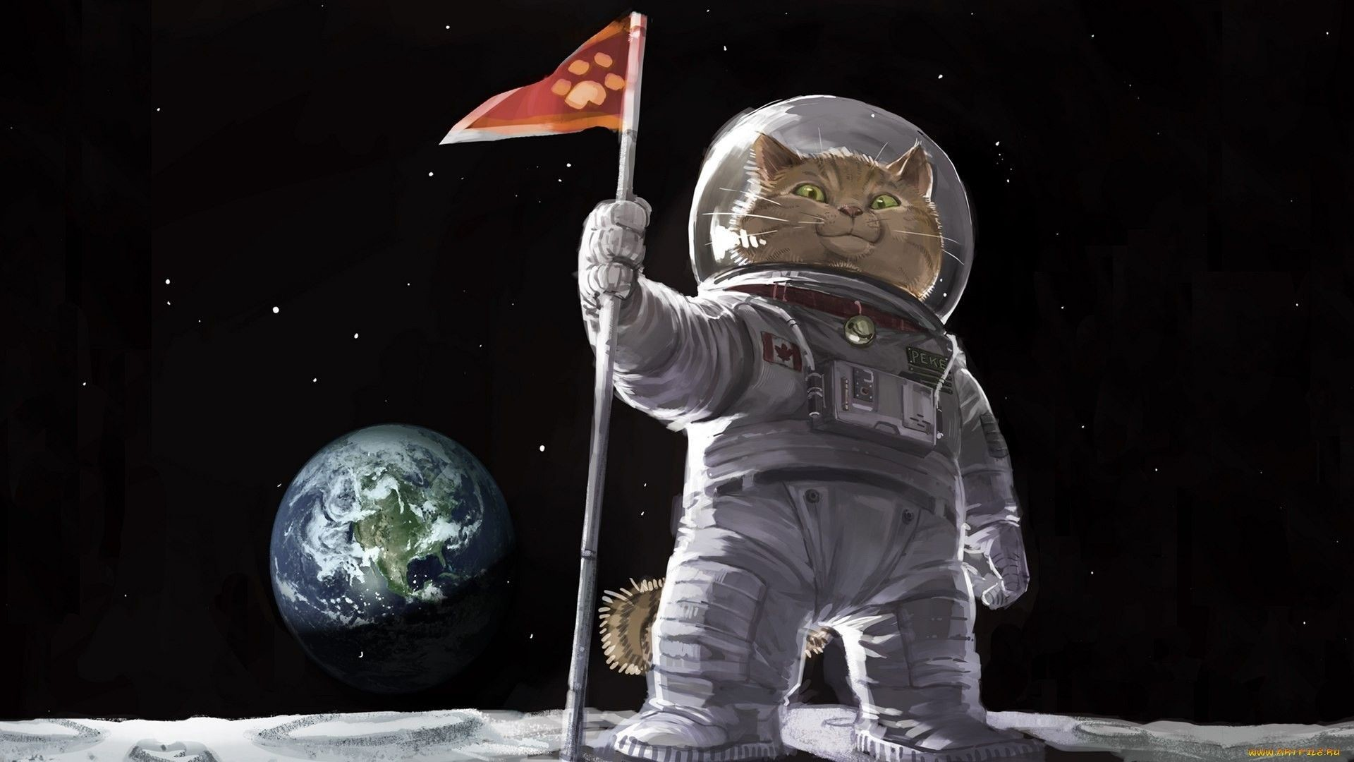 Res: 1920x1080, Cats, conquered the Earth - now onwards