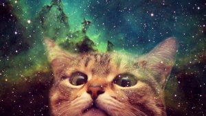 Space Cat wallpapers