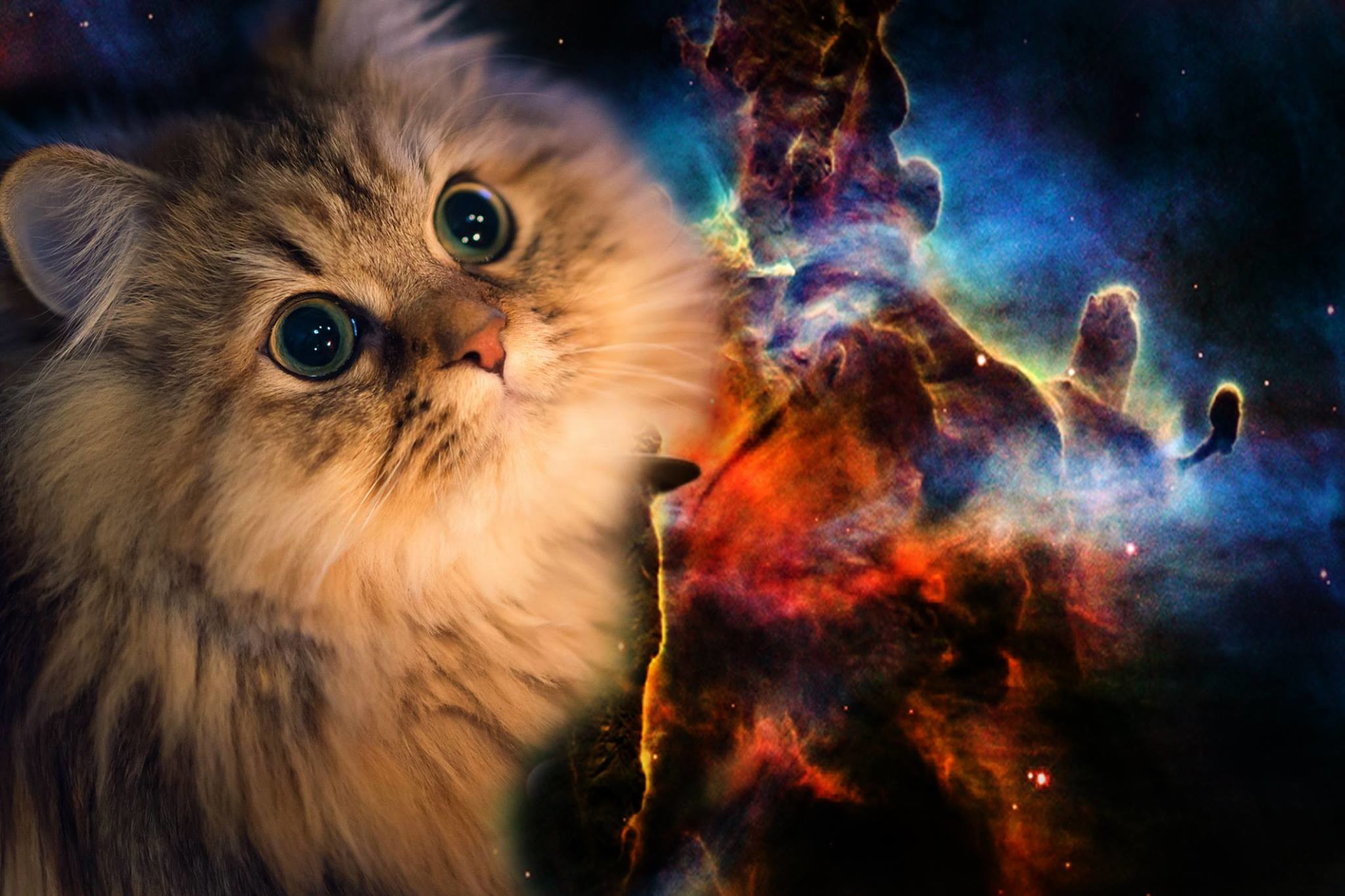 Res: 2048x1365, Space Cat Wallpapers High Quality